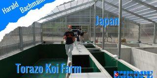 Torazo Koi Farm