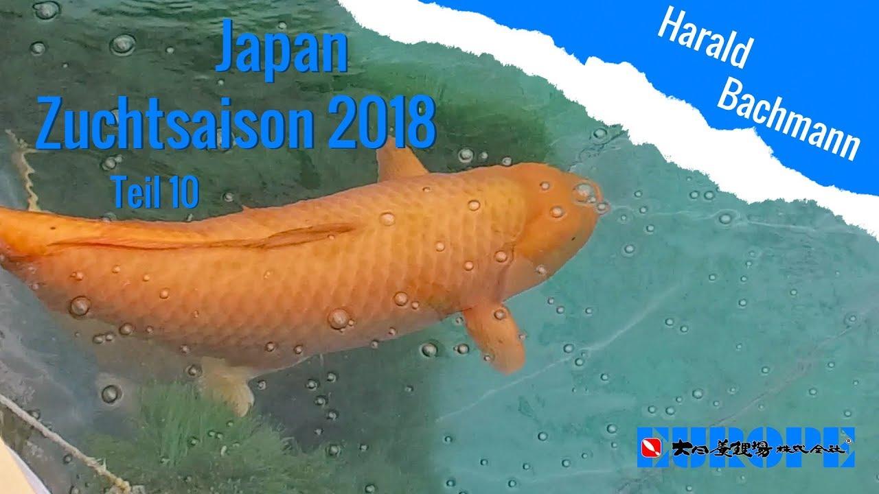 Zuchtsaison 2018 Teil 10