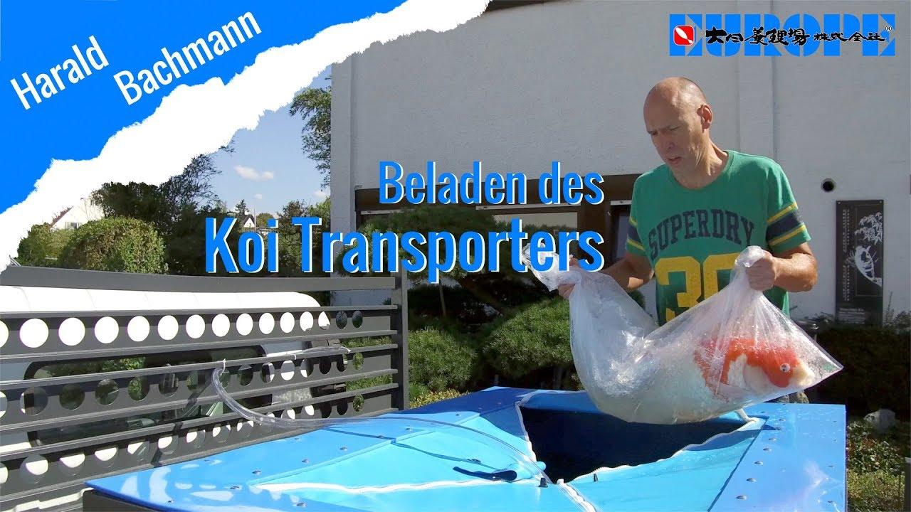 Koi Transport
