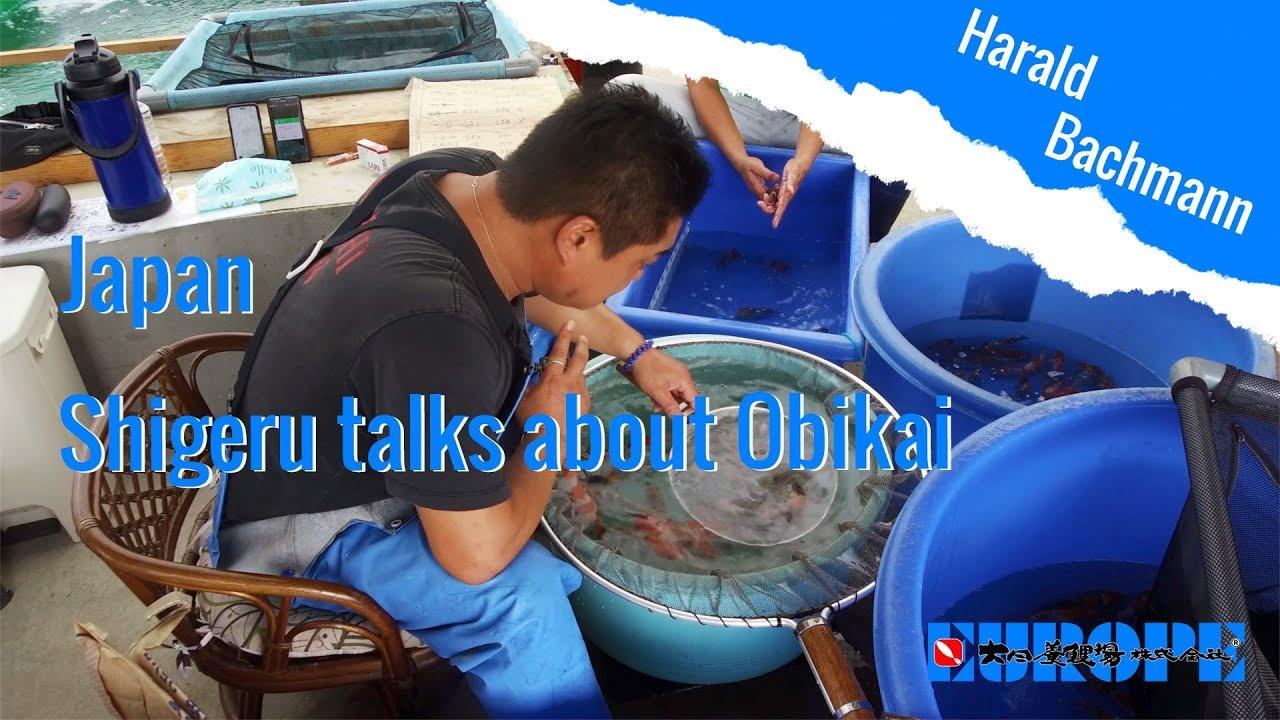 Shigeru talks about Obikai