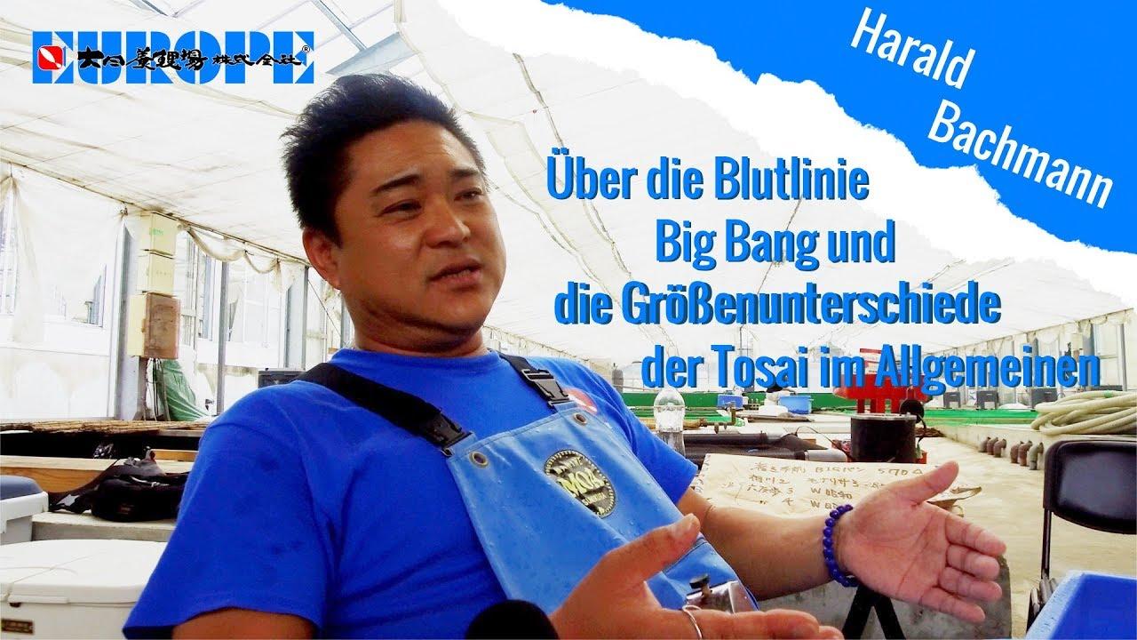 Blutlinie Big Bang
