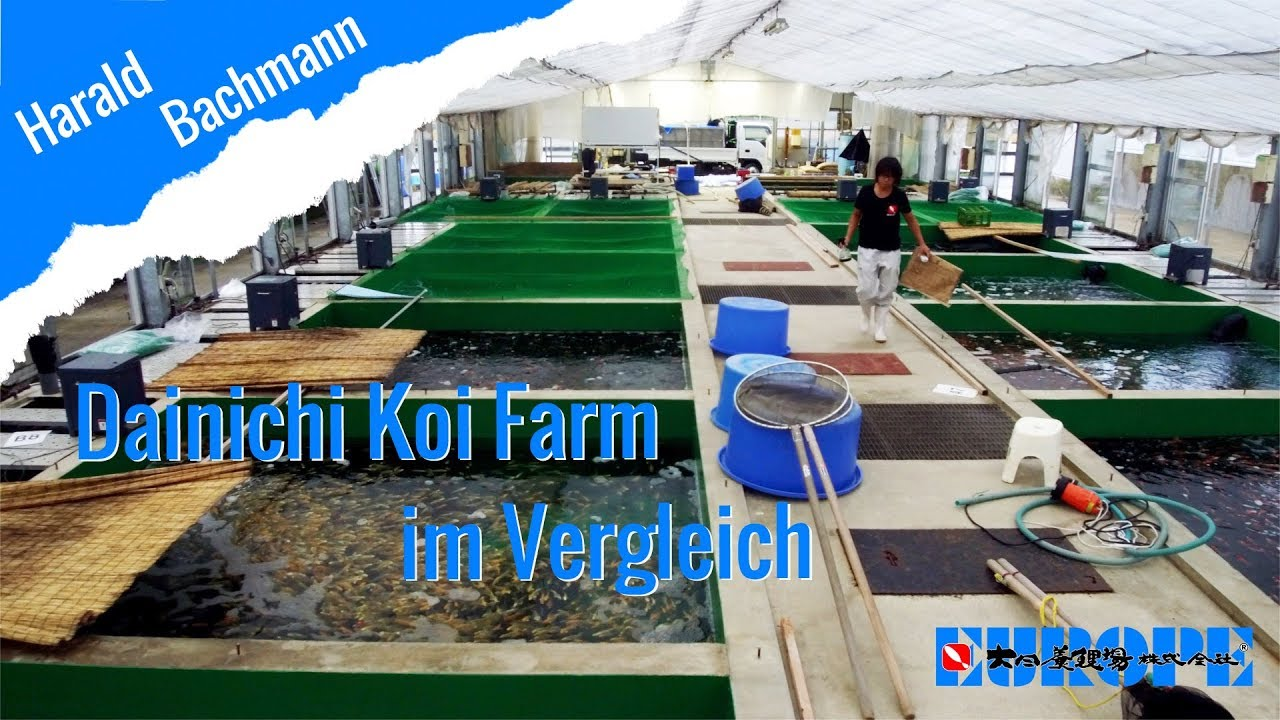 Dainichi Koi Farm im Vergleich