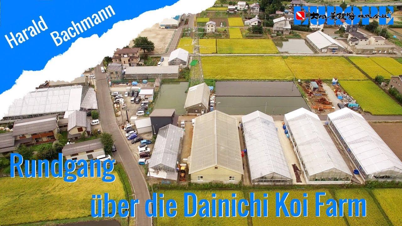 Rundgang über die Dainichi Koi Farm