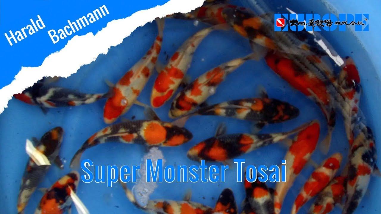 Super Monster und Matsu Kohaku Tosai Sep.2018