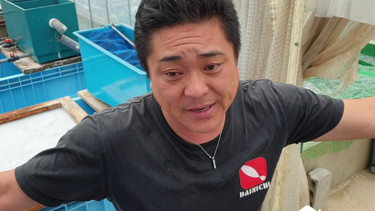 Jumbo Tosai New MiharaX